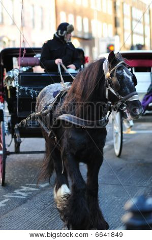 Horse and carriage in Dublin City Centre