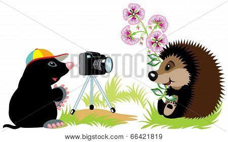 Mole Photographer