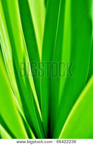 Green Plant Leafs