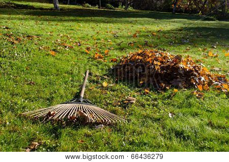 Rake Lying Next To Piles Of Autumn Leaves