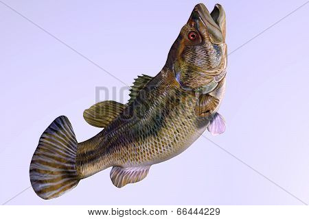 Largemouth Bass Side Profile