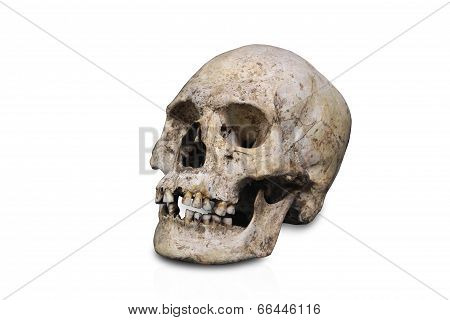 Skull Isolated Human Anatomy