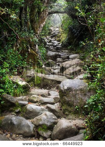 Rocky Trail at Mount Kinabalu in Sabah, Malaysia