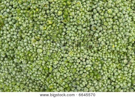 Broccoli Macro Background