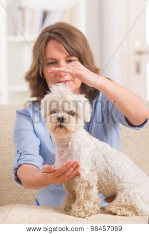 Woman doing Reiki therapy for a dog, a kind of energy medicine.