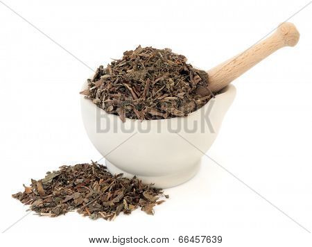 Houttuynia herb chinese herbal medicine in a stone mortar with pestle over white background. Yu xing cao.
