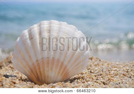 Seashell on the sandy beach with blurred waves in the background