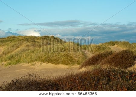 Sand dunes in late afternoon