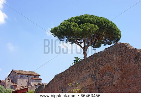 Roman ancient wall with pine tree against blue sky and church on background