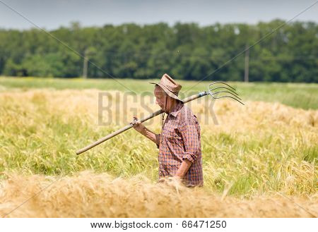 Working In Barley Field
