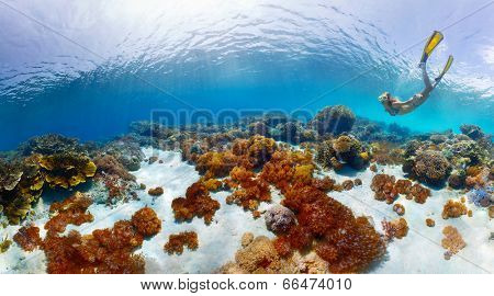 Young lady snorkeling over vivid coral reefs in a tropical sea