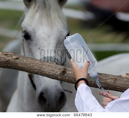 Horse Injection