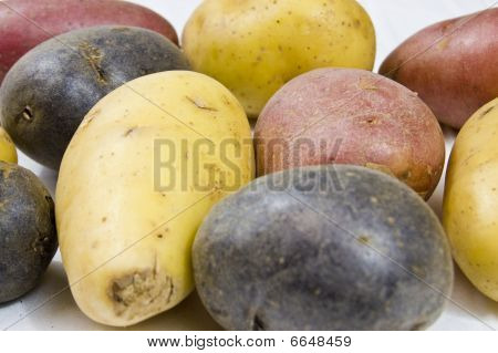 Close Up Of Petite Potato Variety