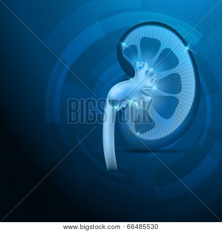 Kidney Cross Section Blue Background