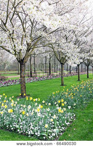 Keukenhof - Garden Of Europe, Netherlands