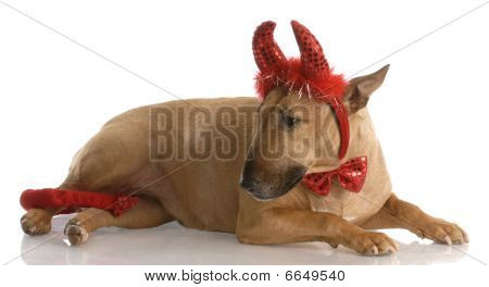 Bull Terrier Dressed As A Devil