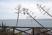 image of stockade  - View - JPG