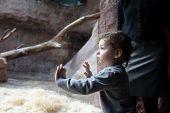 pic of terrarium  - Boy looking at terrarium in the zoo - JPG