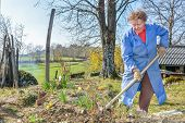 foto of hoe  - Elderly woman wearing blue coat gardening with a hoe - JPG