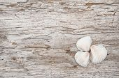 stock photo of rude  - Seashells on the old rude wooden background - JPG