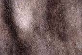 picture of mink  - A close up of a natural beige mink fur background - JPG