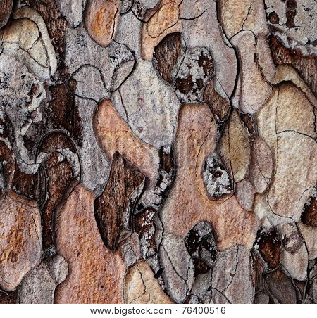 Wooden Texture Of Pine-tree