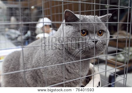Grey Cat In A Cage