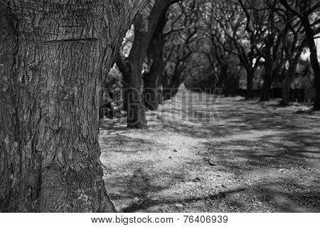 Close-up Of Jacaranda Tree Trunk And Street With Flowers Artistic Conversion