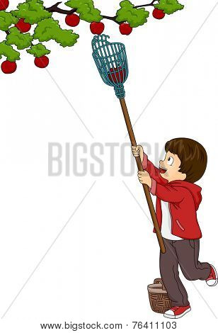 Illustration Featuring a Boy Picking Fruits Using a Fruit Picker