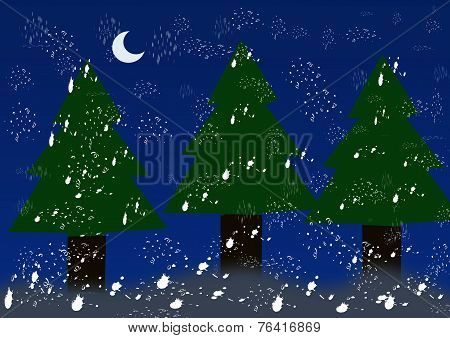 Christmas Trees In The Snow