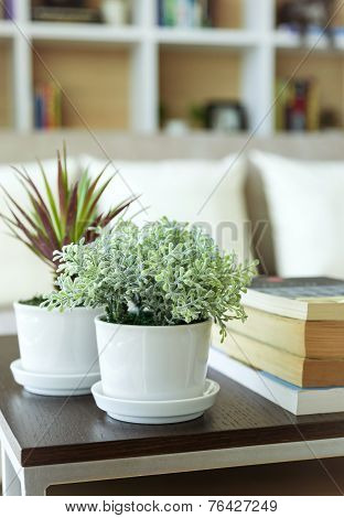 Nature plant Home Decoration