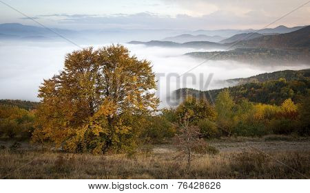 Beautiful Autumn Tree In Front Of Hills Half Covered By Clouds