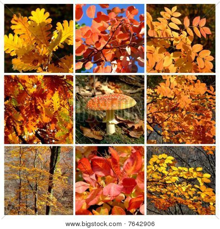 Gold autumn rhapsody