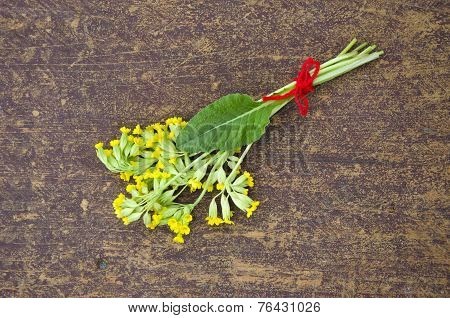 Yellow Spring Primrose Cowslip Medical Flower Bunch