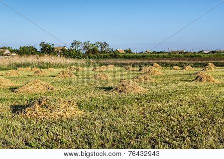 Agricultural Landscape With Ricks Of Hay