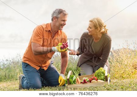 Mature Couple With Crate Of Harvested Vegetables In The Garden