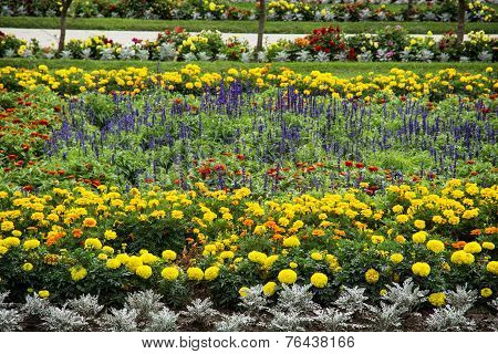 Flowerbeds In The Garden