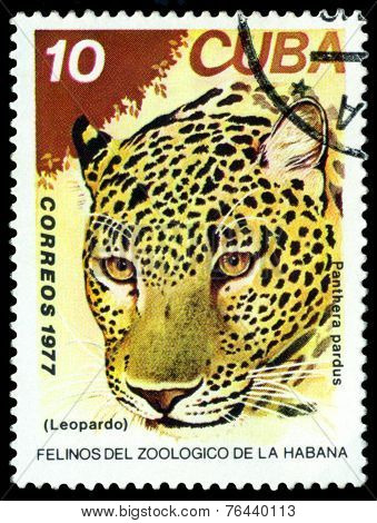 Vintage  Postage Stamp. Wild Big Cats. Leopard.