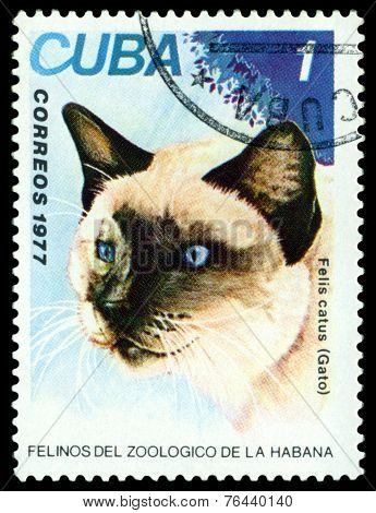 Vintage  Postage Stamp. Wild Cats. Cat.