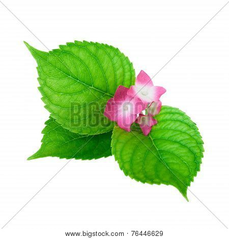 green leaf and pink flower