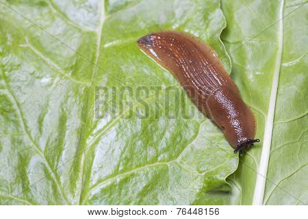 Birds Eye View Of Slug On Green Leaves