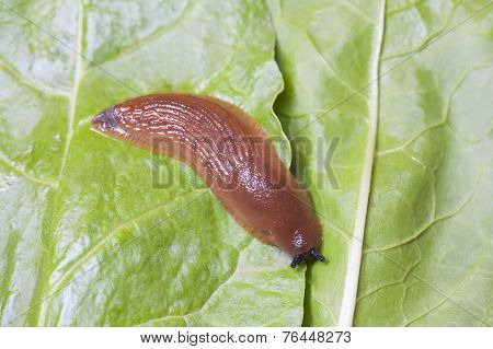 Birds Eye View Of Slug On Leaves