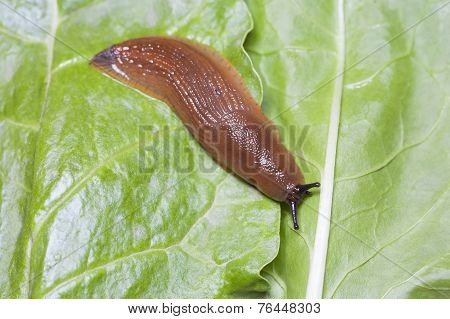 Birds Eye View Of Slug