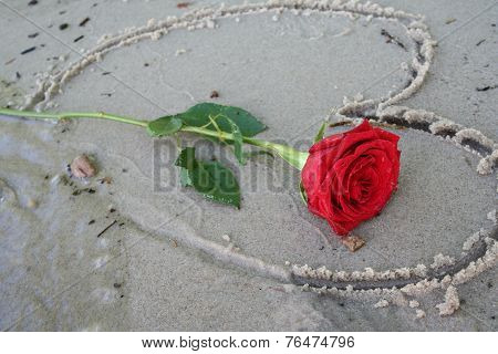 Romatic Beach Rose