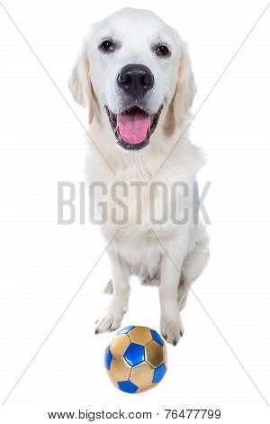 Golden retriever puppy with toy ball isolated