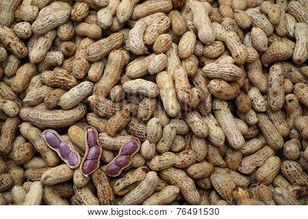 Boiled Peanut 1