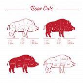picture of wild hog  - Wild hog boar game meat cut diagram scheme  - JPG