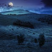 image of coniferous forest  - two trees in front of mountain hillside with coniferous forest and high peak under cloudy sky at night in full moon light - JPG