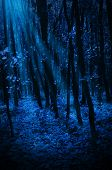 pic of moonlight  - Night forest with moonlight rays - JPG