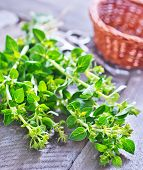 image of oregano  - fresh oregano on a table - JPG